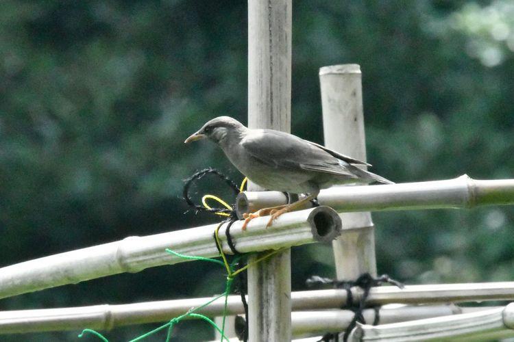 Vertebrate Animal Wildlife Animal Themes Bird Animals In The Wild Animal Perching