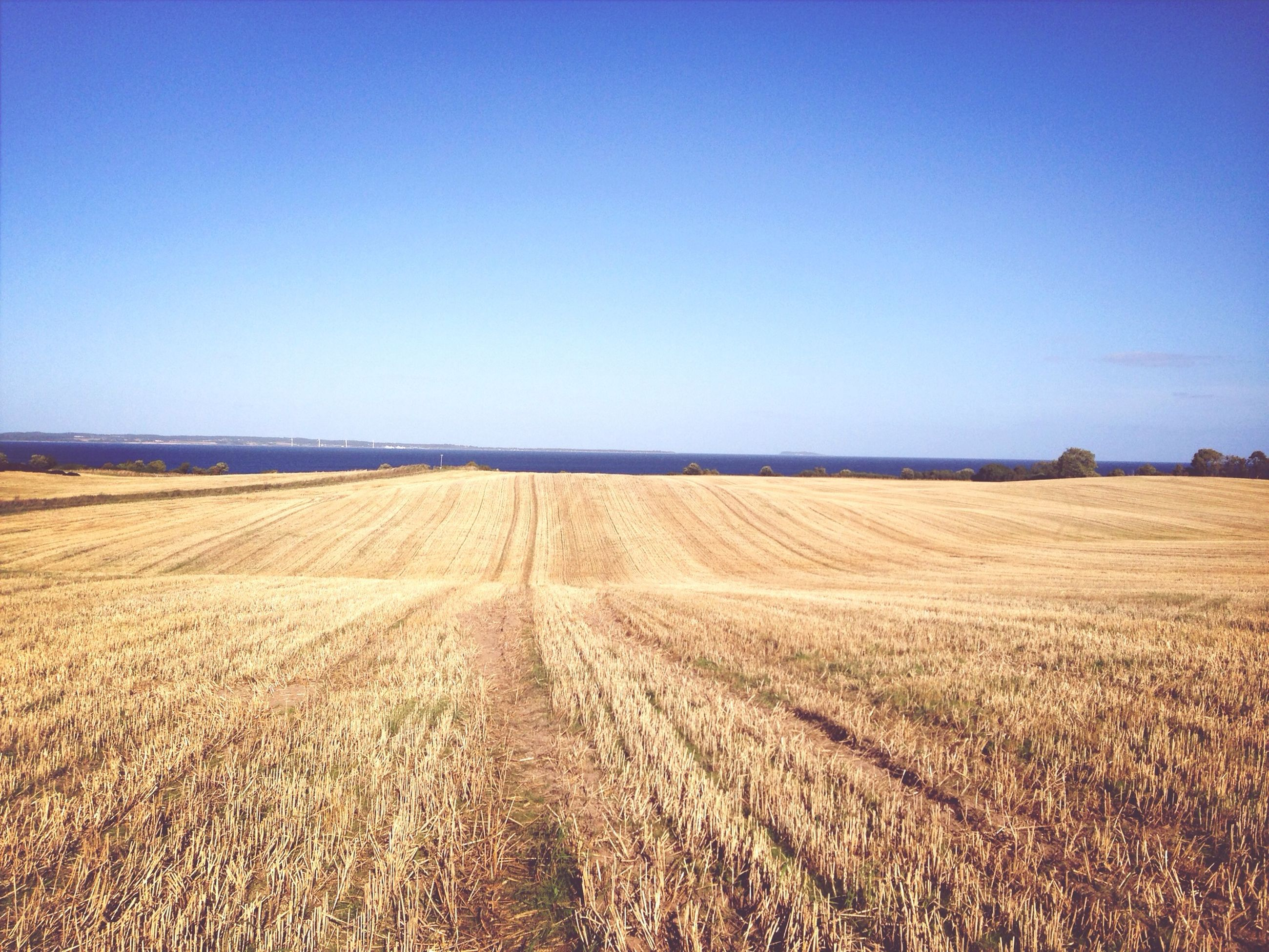 clear sky, landscape, copy space, tranquil scene, tranquility, field, blue, agriculture, rural scene, horizon over land, scenics, farm, nature, beauty in nature, crop, grass, remote, cultivated land, day, growth