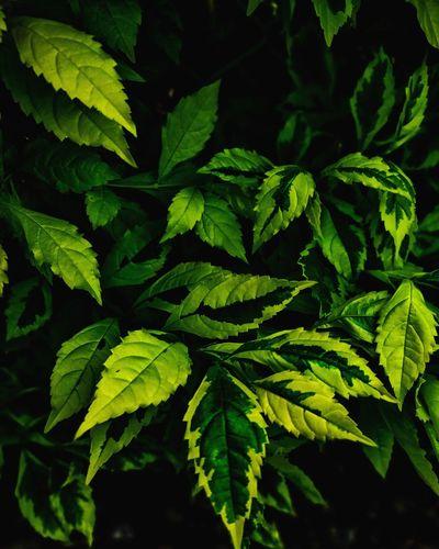 Green World Leaf Agriculture Close-up Plant Green Color Plant Part Leaf Vein Natural Pattern Botany Stamen Botanical Garden