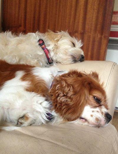 Pets Domestic Mammal Domestic Animals Canine Dog Animal Themes