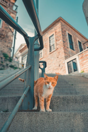 Cat on a building