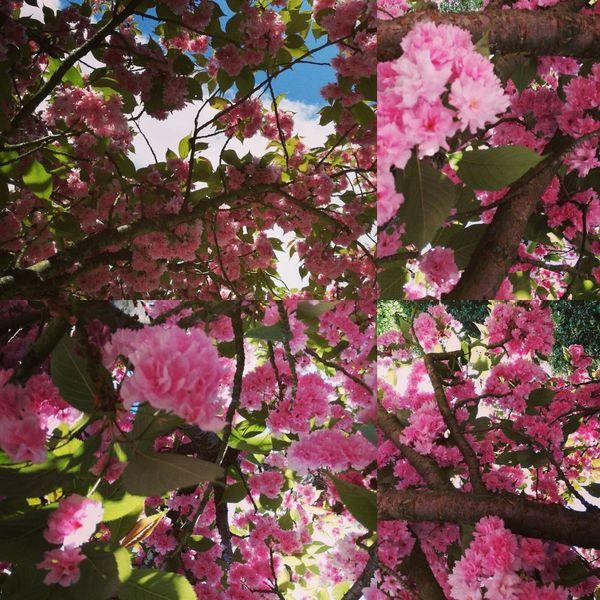 Le printemps est arrivé Flower
