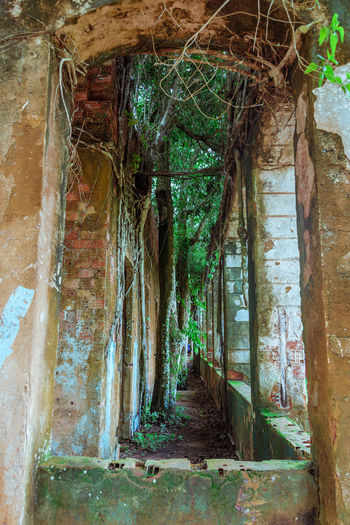 Ruins of Paricatuba - House built in Paricatuba, state of Amazonas, in the year of 1889, first used as a shelter for Italian immigrants, and later was a high school of arts and crafts, a public jail and a leprosarium. Abandoned Buildings Amazon Amazonas Architecture Bad Condition Close-up Nature No People Paricatuba Ruins Tree