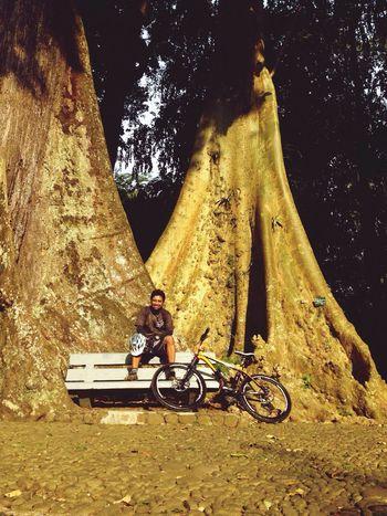 Big tree ... Gowes di bogor Razhar Istana Bogor MTB INDONESIA
