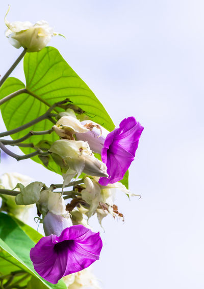 Low angle view of purple flowering plant against sky