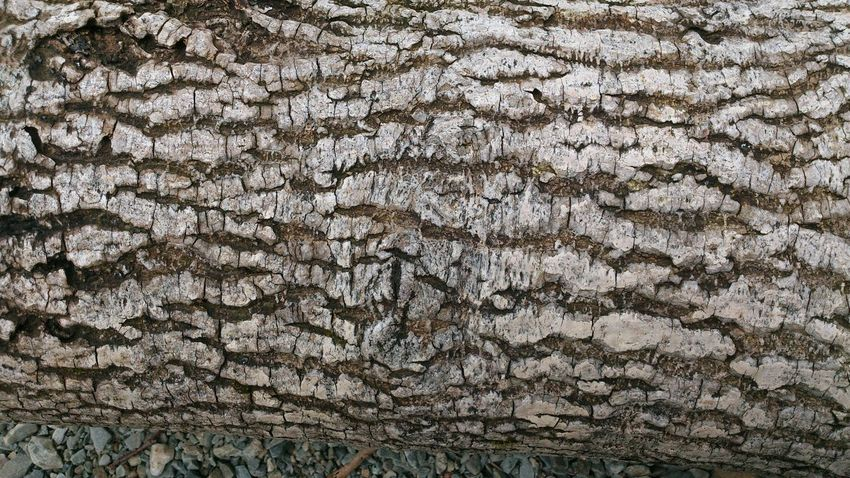 Backgrounds Full Frame No People Pattern Textured  Day Outdoors Nature Close-up Tree Bark Patterns Textured  EyeEmNewHere Branch Fresh On Eyeem