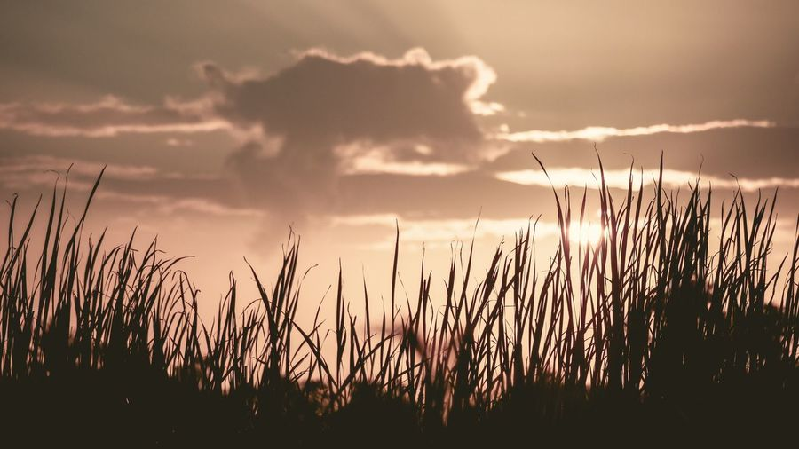 Close-up of silhouette grass on field against sky during sunset