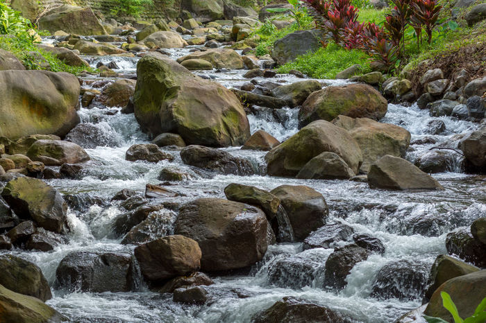 A narrow river / stream flowing rapidly over large rocks and boulders with green healthy vegetation in the back ground. Flowing Riverside Beauty In Nature Day Large Rocks Long Exposure Motion Nature No People Outdoors River Rock - Object Stream Tranquil Scene Tropical Climate Water Waterfall