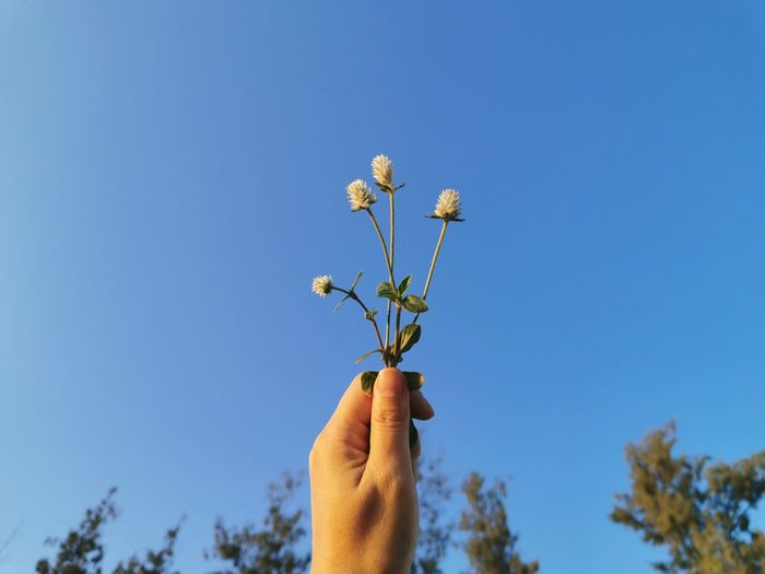 Low angle view of hand holding plant against blue sky