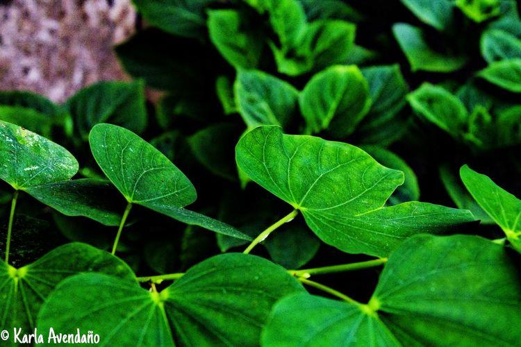 Green Green Green!  Urban Gardening Belleza Natural Naturaleza Nature