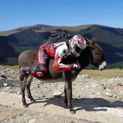 Racing Donkey