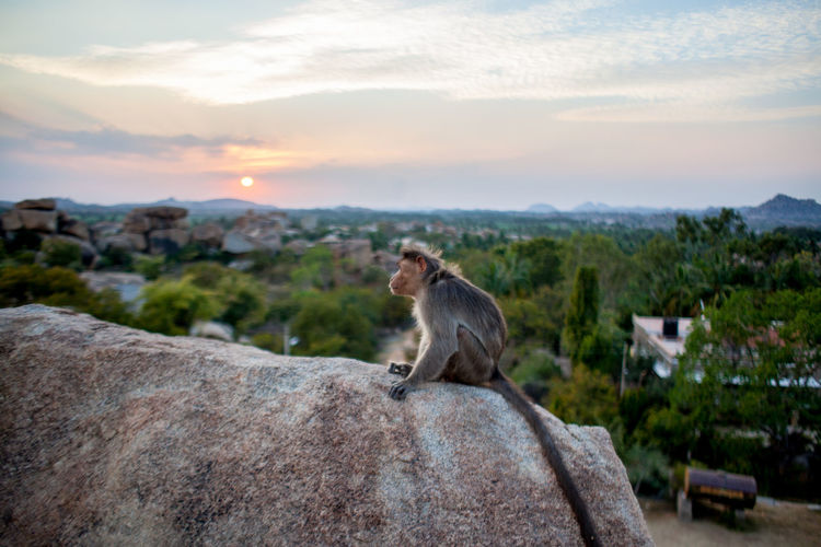 Cat sitting on rock against sky during sunset