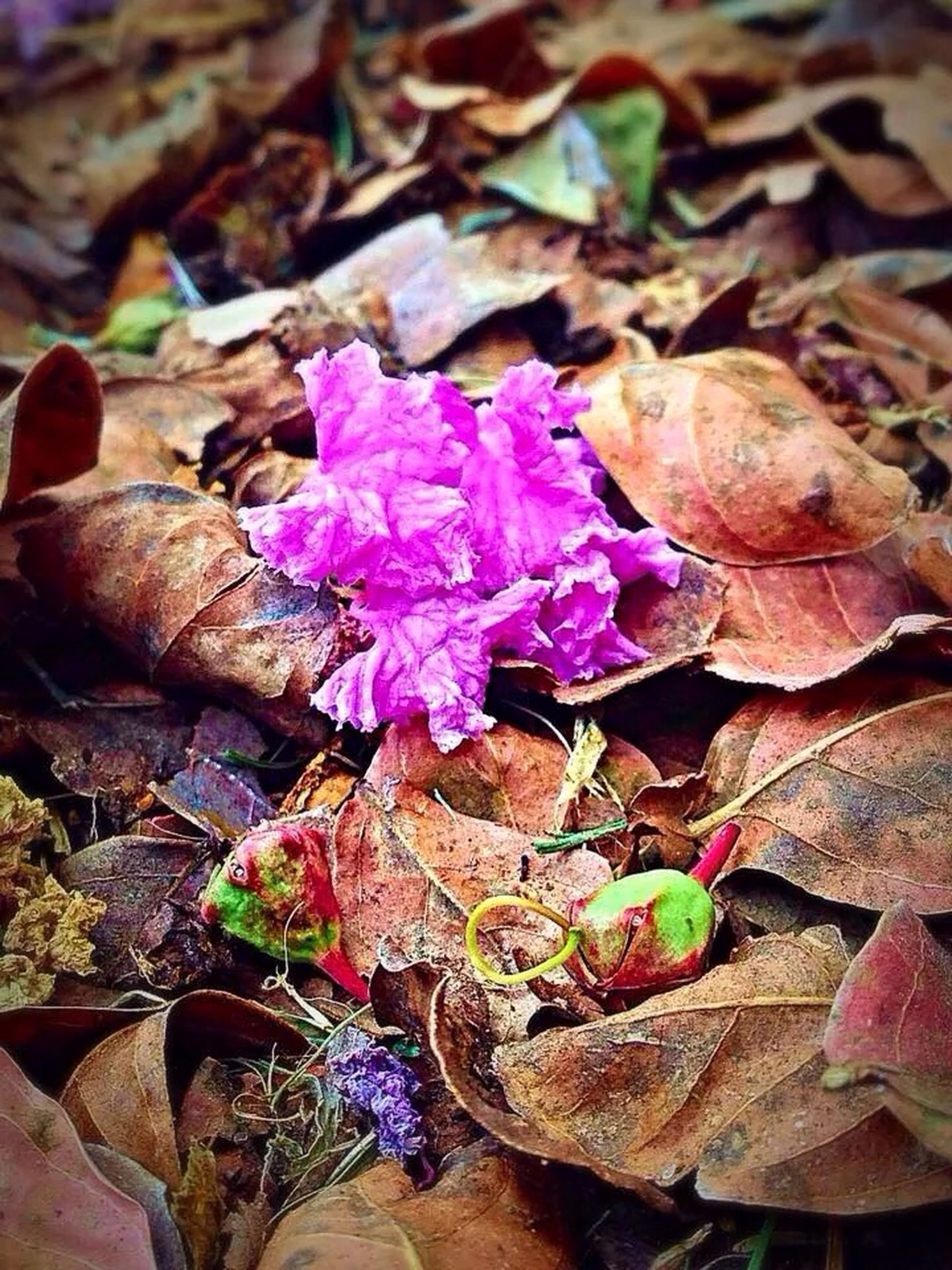 purple, dry, fragility, close-up, flower, leaf, high angle view, nature, freshness, autumn, fallen, petal, season, beauty in nature, change, no people, outdoors, day, plant, focus on foreground