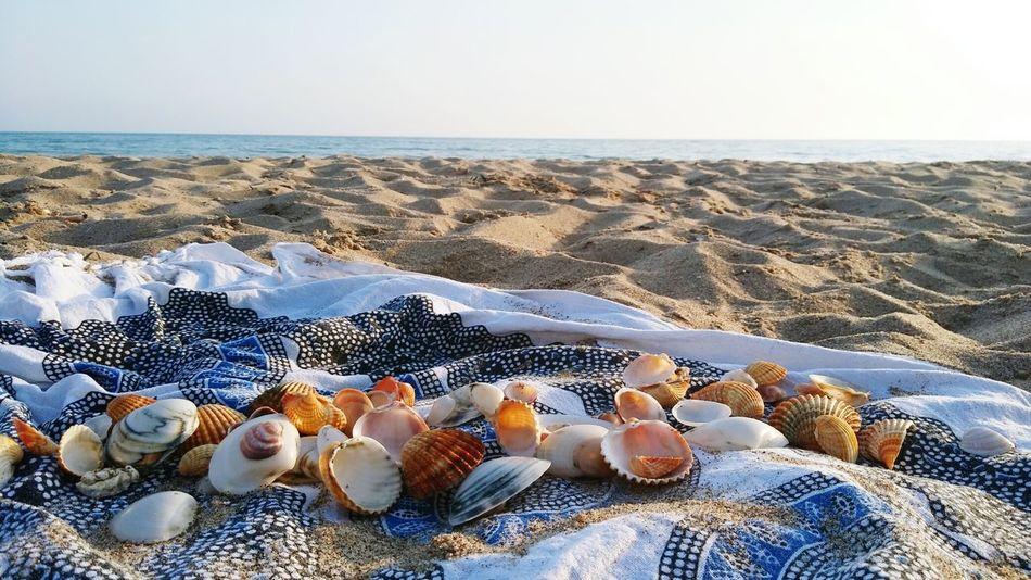 Sicilia Gela Mare Spiaggia Spiaggia Sole Mare Conchiglie