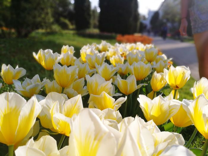 Love Yellowflower💛 Crocus Flowerbed Springtime Water Bouquet Petal Tulip Botany Plant Life