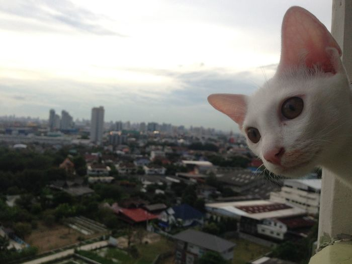 Animal Animal Head  Animal Themes Architecture Building Building Exterior Built Structure Cat City Cityscape Domestic Domestic Animals Domestic Cat Feline Looking Mammal No People One Animal Pets Sky Vertebrate Whisker