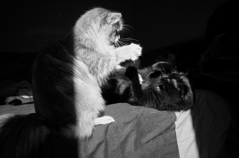 Première règle du Fight club... Blackandwhite Photography Catoftheday Cats Of EyeEm Black & White Cat Lovers Black And White Collection