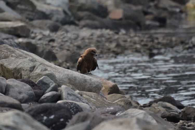 EyeEm Selects Solid Rock Animal Animal Wildlife Animal Themes Nature