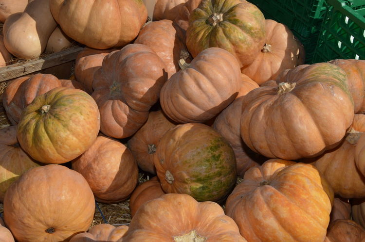 Zoom on Pumpkins (marrow) on a weekly market Bio Pumpkins Zoom On Pumpkins (marrow) On A Weekly Market Biological Biological Food Food Food And Drink Fresh Freshness Healthy Eating Large Group Of Objects Market Market Stall Marrow Marrows No People Pumpkin Pumpkin-head Raw Vegetables Vegetable Vegetables Weekly Market