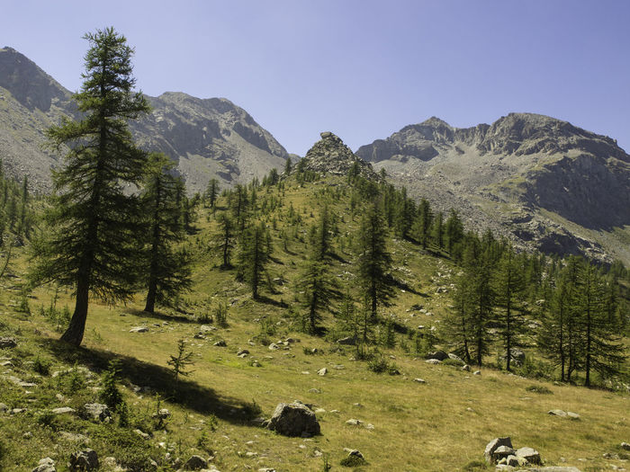Low angle view of trees on mountain