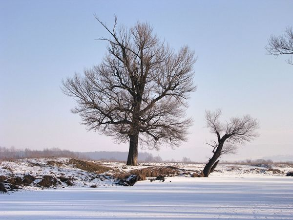 Transylvania Bare Tree Beauty In Nature Branch Clear Sky Cold Cold Temperature Frozen Isolated Landscape Lone Nature Outdoors Remote Scenics Sky Snow Solitude Tranquil Scene Tranquility Tree Winter