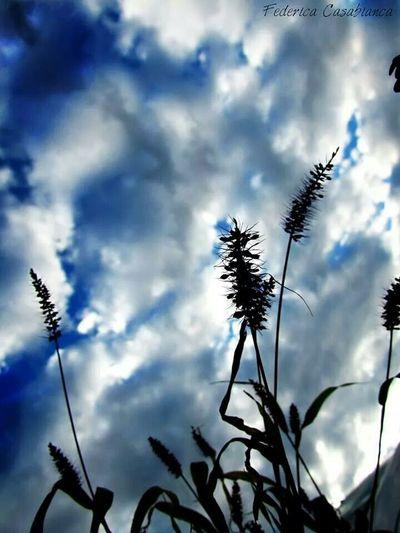 Grano Ombra Sfumature Nero Riflesso Dwl Blu Blue Nuvole Bianche