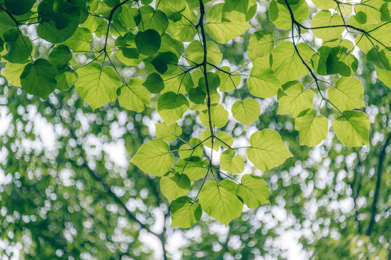 Low angle view of fresh green plant against tree