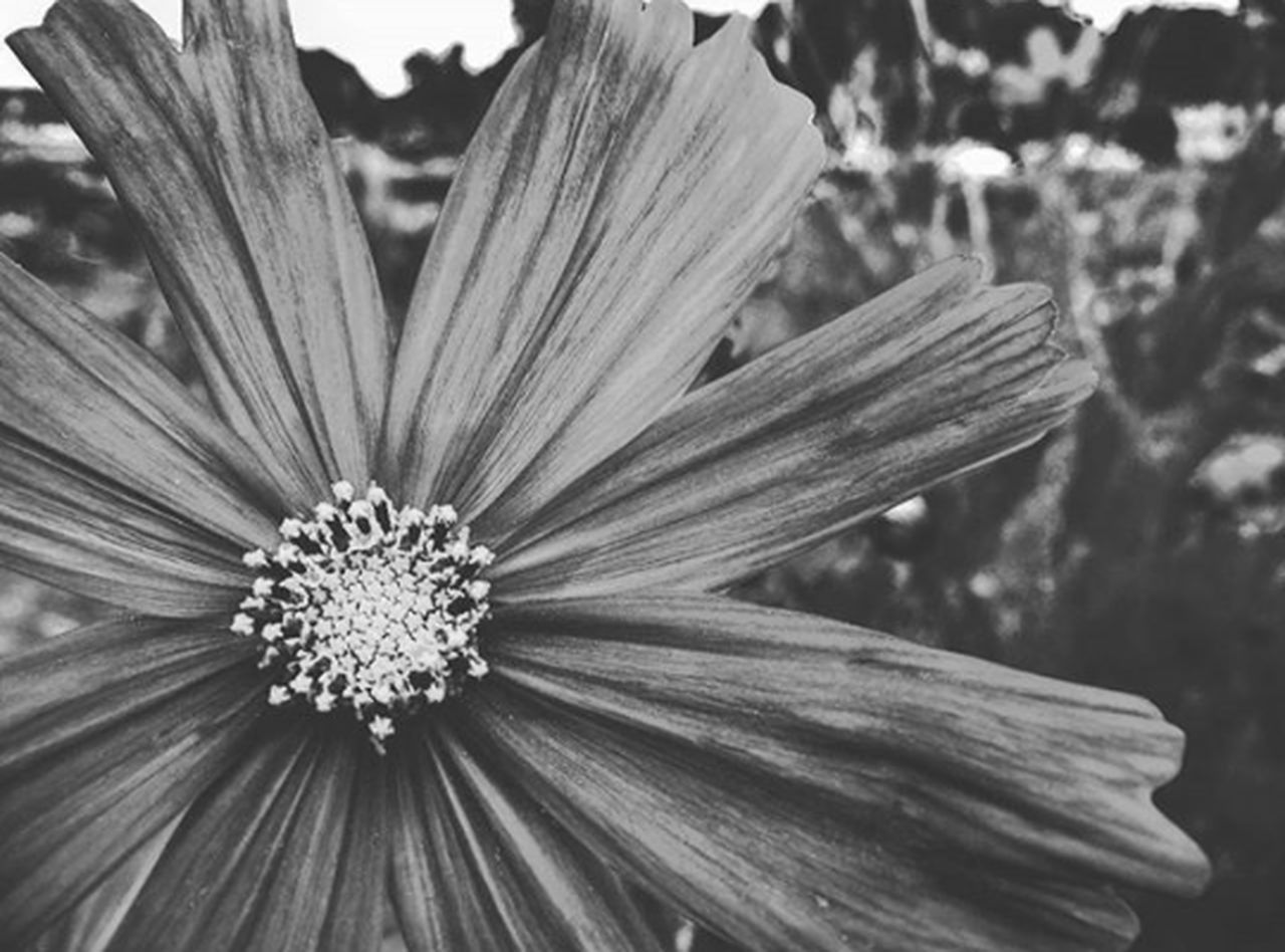 flower, petal, flower head, fragility, freshness, beauty in nature, nature, growth, pollen, close-up, outdoors, day, focus on foreground, plant, no people, blooming