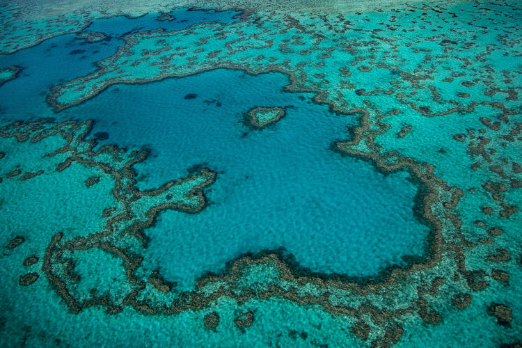View of coral underwater
