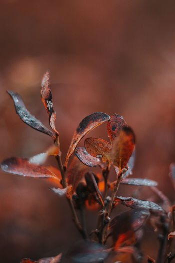 Close-up of dried plant during autumn