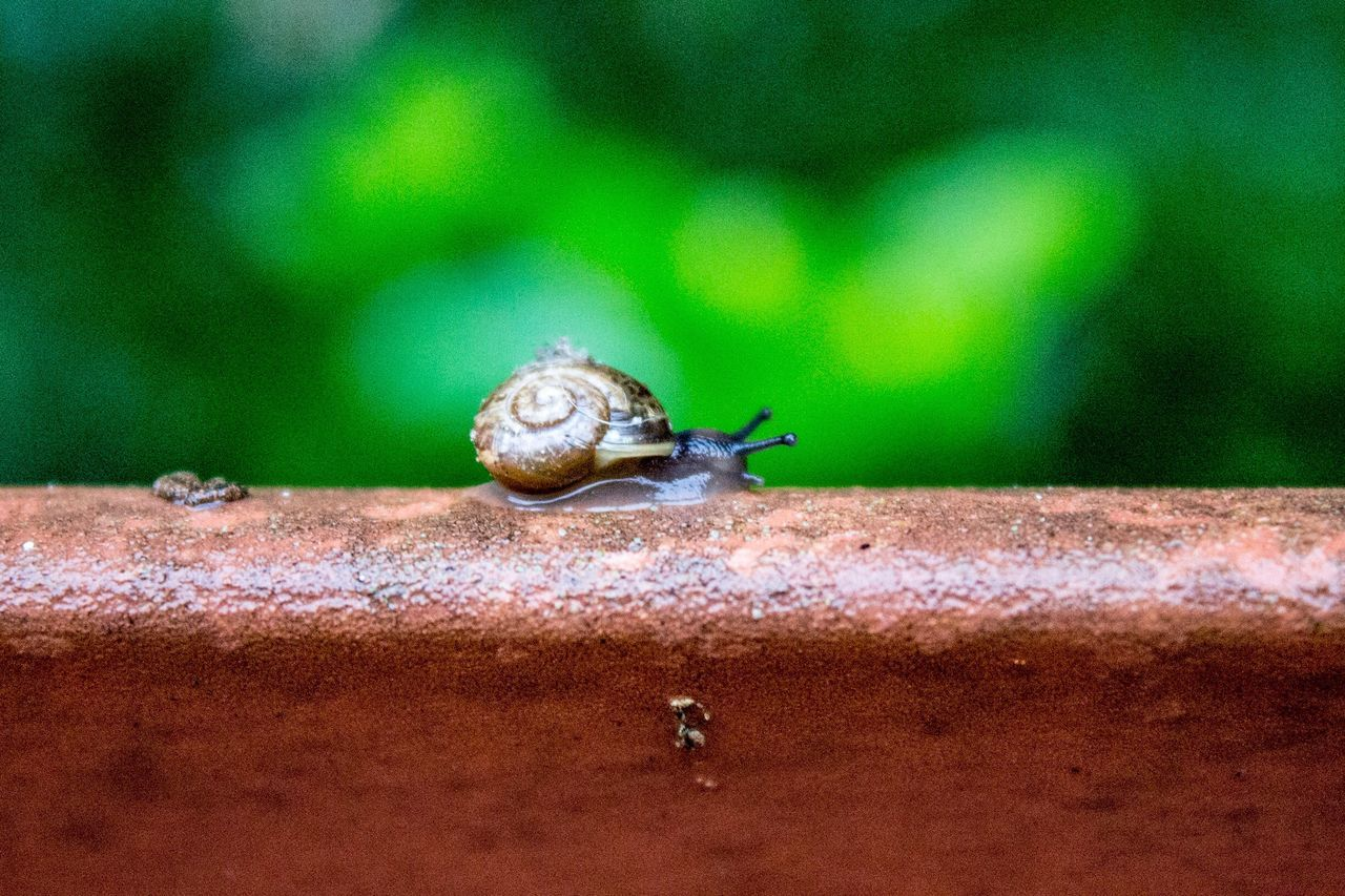 one animal, animal themes, animals in the wild, snail, animal wildlife, wildlife, insect, nature, outdoors, day, close-up, no people, slug, fragility