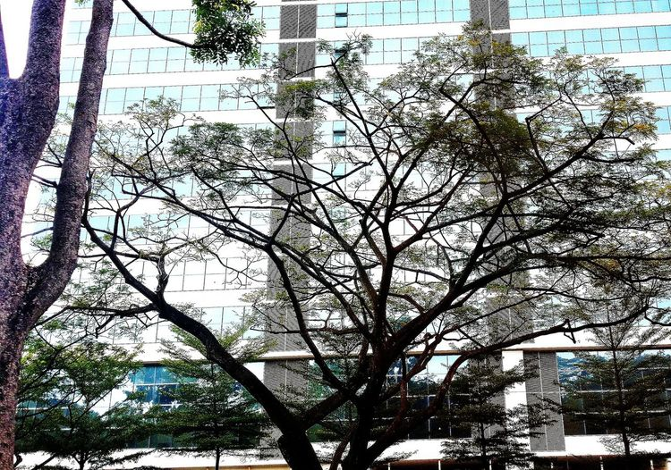 Nature EyeEm Nature Lover Urban Nature Building And Trees Architecture Design Trees Branches