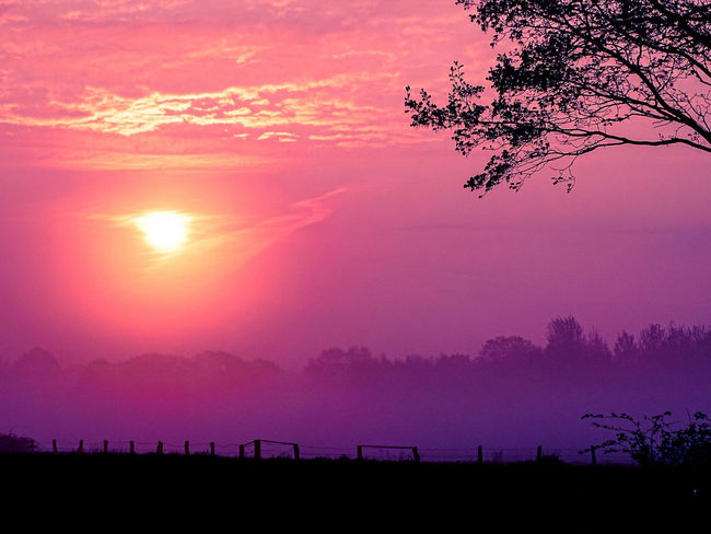 Foggy Weather Fog Foggy Sunset Purple Pink Color Tree Silhouette Sky Landscape Nature Beauty In Nature No People Multi Colored Outdoors Freshness Day Romantic Landscape Romantic Atmosphere Pink Black Fence Field And Fence Field And Sky Black Foreground