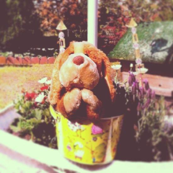 Happy Easter II Puppy Beagle Stuffedanimal Animals dog flowers cute love lol eastern christian holiday picoftheday epic meme indie alternative instaepic instamood instagood instabest