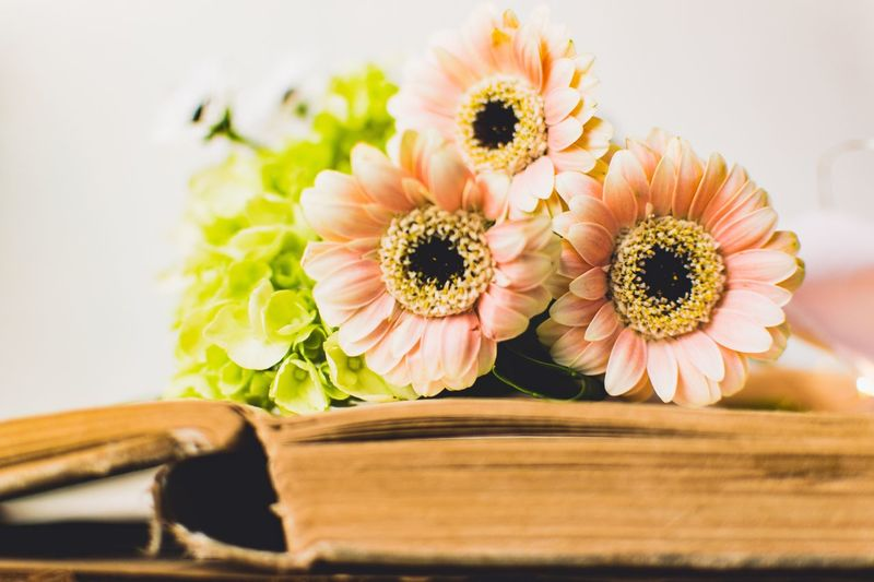 Open Book  Book Flower Flowering Plant Freshness Plant Fragility Flower Head Vulnerability  Beauty In Nature Inflorescence Close-up Indoors  Nature No People Petal Gerbera Daisy Daisy Table Wood - Material Still Life