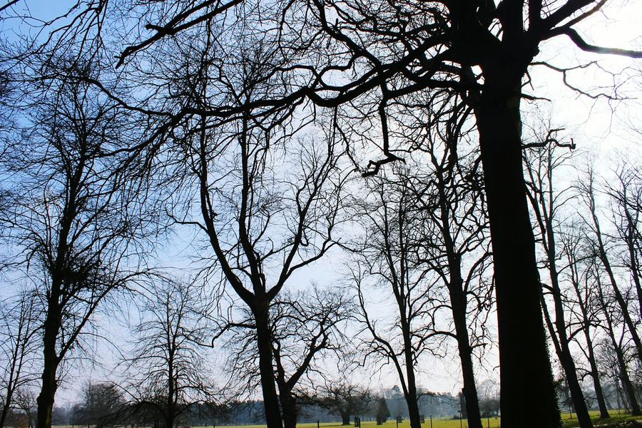 Nature Trees Normanby Hall Scunthorpe