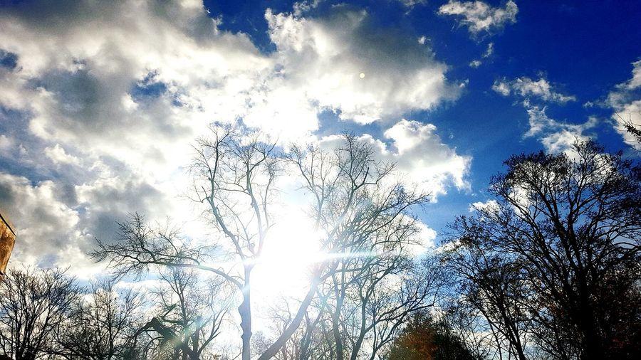 Sunnyday☀️ Kiss The Sky Capturing Freedom Jamaica Cheese! Enjoying Life Autumn Colors Sunlight Still Life