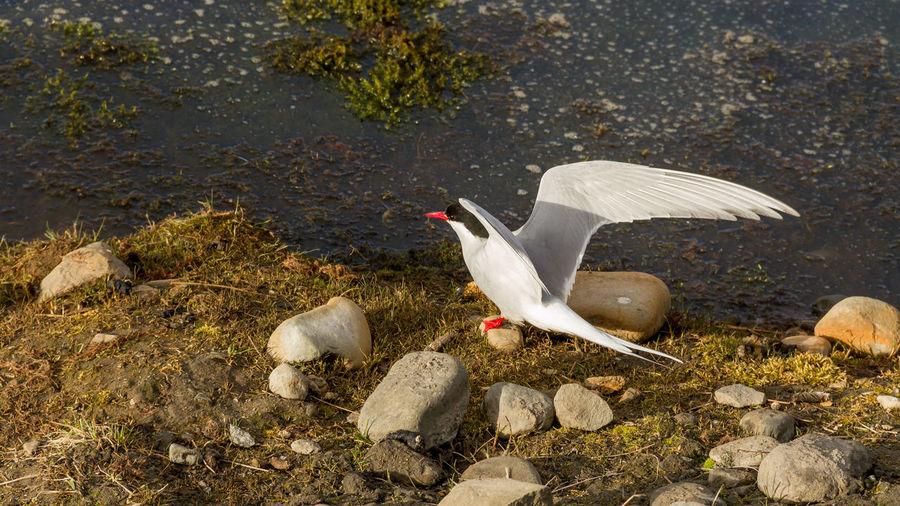 High Angle View Of Bird Perching At Lakeshore