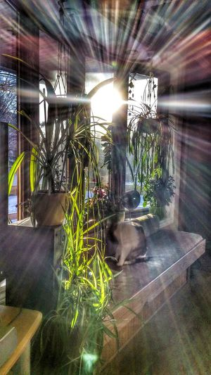Plant Lover Plant Life Sunlight Showcase: February Sunrays Trough My Window Very Cold Morning Enjoying Life Taking Photos Smartphonephotography