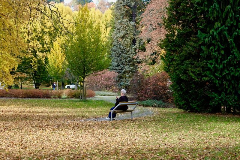 Tree Plant Seat One Person Full Length Bench Sitting Nature Autumn Park Day Real People Leisure Activity Men Lifestyles Land Relaxation Park - Man Made Space Adult Outdoors Change Park Bench Contemplation