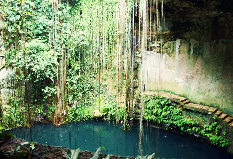 EyeEmNewHere Cenote Ik Kil Cenote Ikil De Chichén Itzá Mexico Yucatán, México Yúcatan Beauty In Nature Growth Ik Kil Nature Outdoors Plant Reflection Tranquility Water