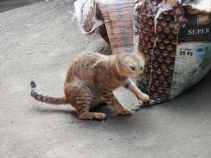 Cat Pets Animal Themes Cute