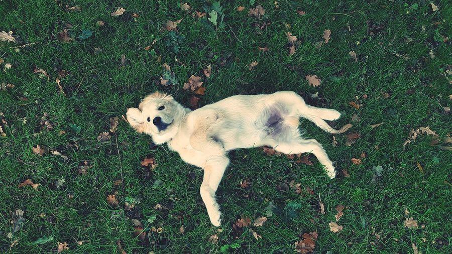 Paco 🐶 Pets