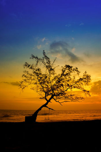 Scenic view of tree by sea at sunset