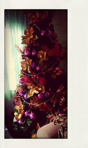 Christmas Tree The passion tree