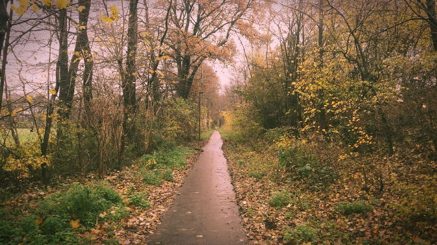 My Bicyclepath Today🤗 The Way Forward Beauty In Nature Landscape Mood Captures Simple Beauty You Raise Me Up✨ YESVEMBERFUN Lucky Me🦄 Enjoying Life Untamed Heart My Soul's Language Is📷 For My Friends 😍😘🎁 Treelovers Tranquil Scene Bare Tree Tranquility Yesvember EyeEm Nature Lover Rainshot..what Else😄