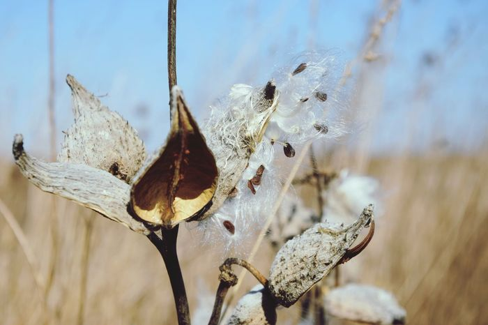 Dry Plants Seeds Fragility Close Up Photography Focus On Foreground Blury Background Nature_collection Nature Photography