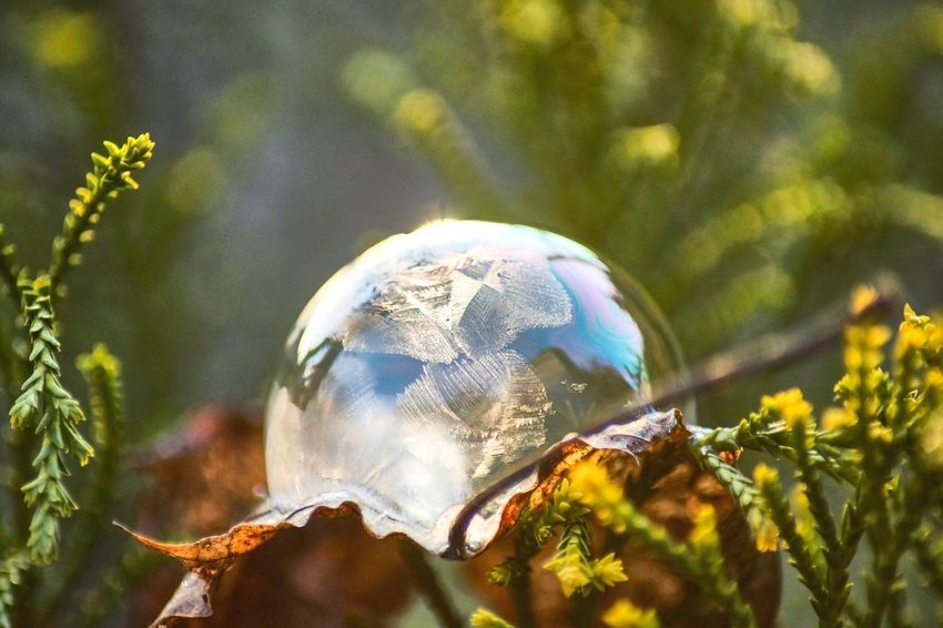 Frozen Soapbubble Snow Frozen Cold Temperature Close-up Nature Sphere Plant Focus On Foreground Tree Reflection Day Transparent Selective Focus No People Outdoors Fragility Vulnerability  Growth Single Object Beauty In Nature Sunlight