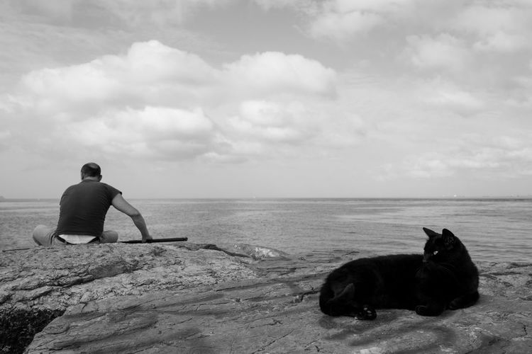Animal Cat Turkey Istanbul Water Sky Cloud - Sky Beach Sea One Person Rear View Pets Domestic Real People Horizon Over Water