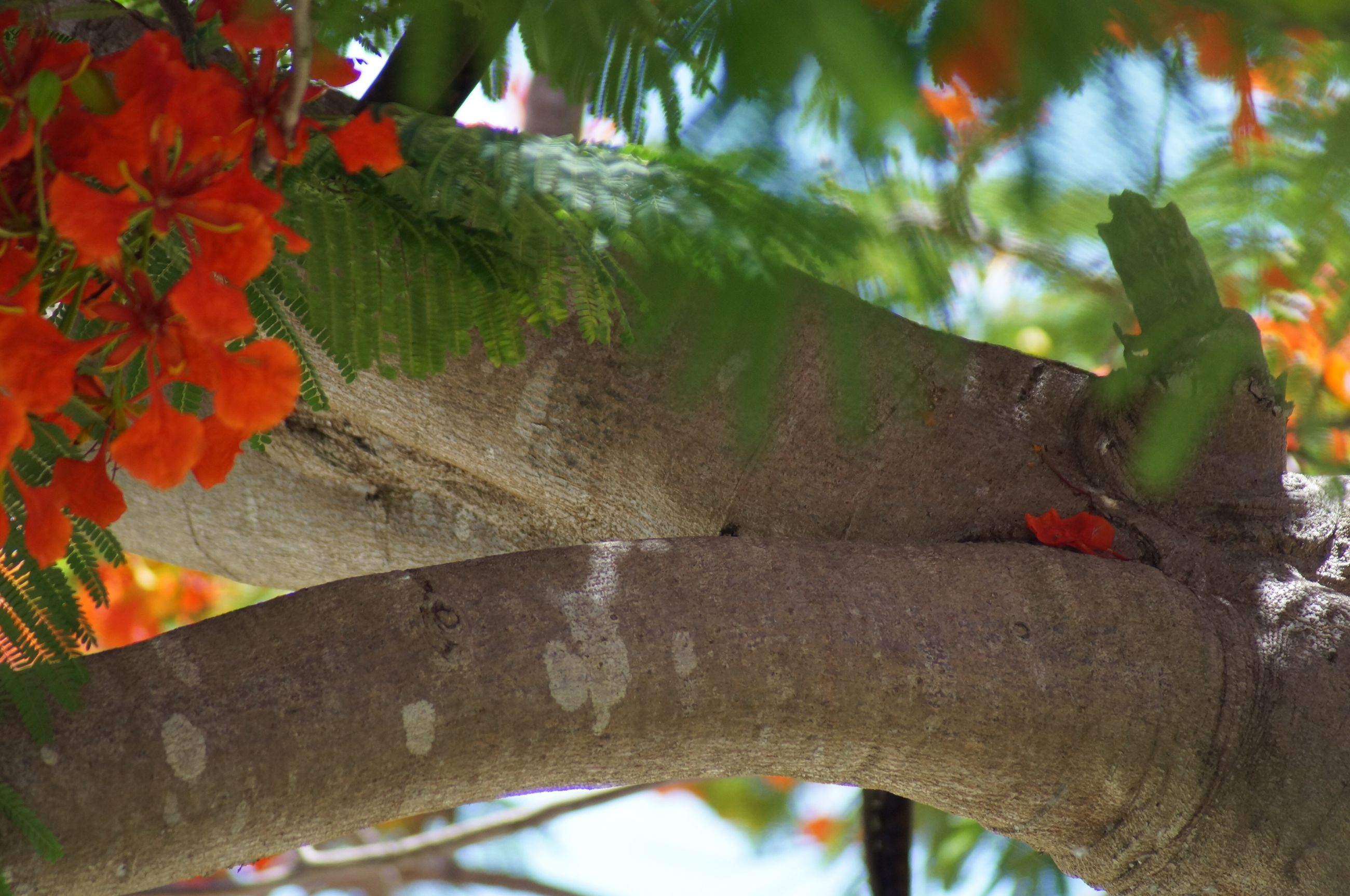 leaf, tree trunk, close-up, growth, nature, outdoors, red, green, tranquility, flower, fragility, beauty in nature, day, green color, vibrant color, growing, no people, freshness, weathered